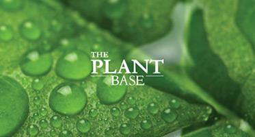 The Plant Base Masks